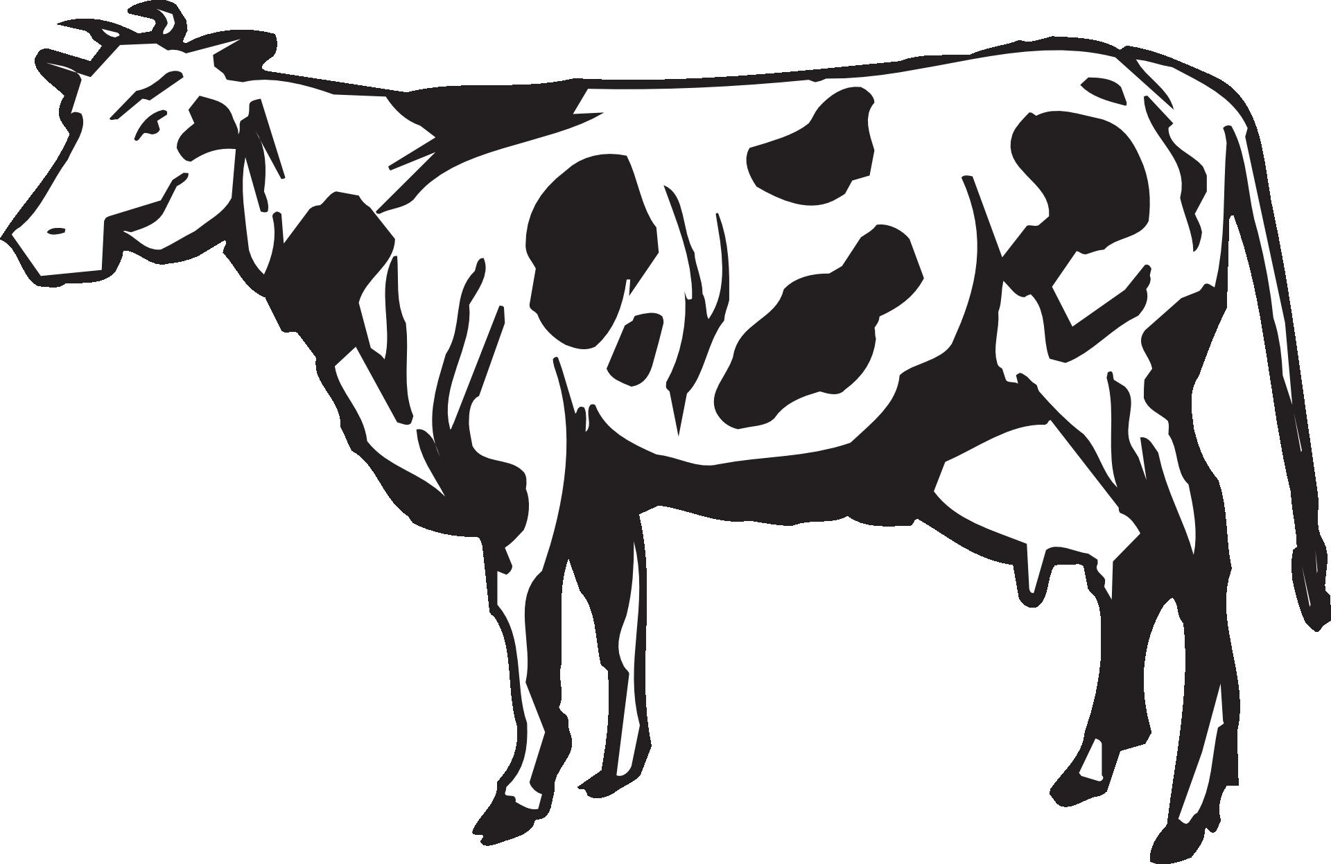cow-44713
